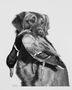 William Harrison, Buster, 2015, carbon pencil on paper, 19 x 24 in.