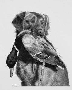 Buster, 2015, 19x24in.  carbon pencil on paper